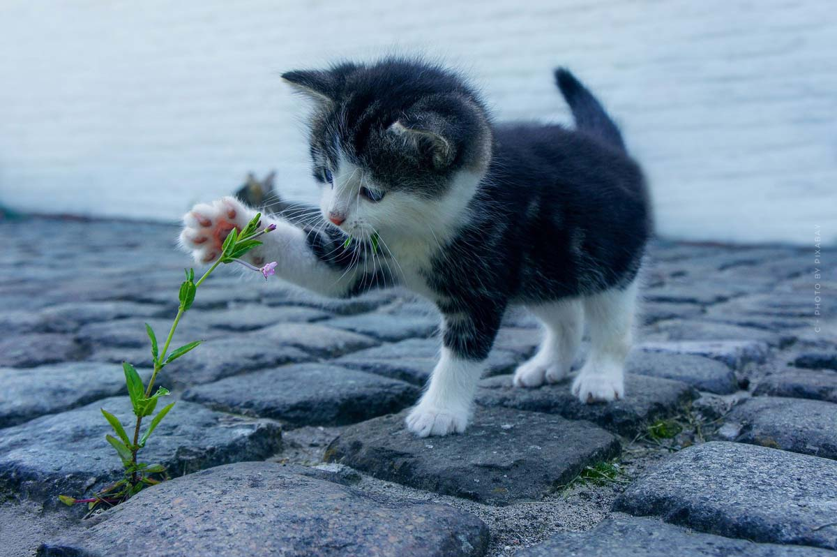 Katzen Videos auf YouTube: Lernen von den Besten - Evergreens!